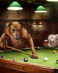 photographer julian wolkenstein used real dogs to reimagine the by artist arthur sarnoff the iconic painting of dogs playing pool