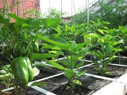 how to build a vegetable garden. How To Build A Vegetable Garden E