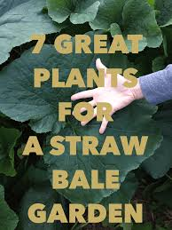 7 great plants for a straw bale garden straw bale gardening is a wonderful way to grow more weed less and garden almost anywhere it s great for apartment