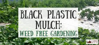 black plastic mulch weed free gardening