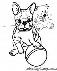 Small Picture Boston Terrier Puppy Coloring Pages Best Coloring Page Site