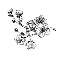 Resultado de imagen de rama de cerezos