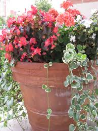 Small Picture A Begonia and Vinca Vine Container Garden Idea for Partial Shade
