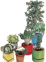 container garden vegetables. Winter Container Garden - Vegetables Growing In Six Containers D