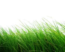 grass transparent background. Free Icons Png: Grass Png Images, Pictures Transparent Grass Transparent Background G