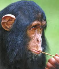 Αποτέλεσμα εικόνας για ανθρωποπίθηκος