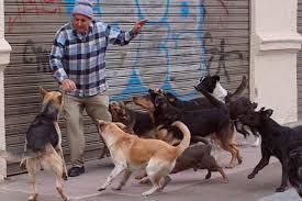 Resultado de imagen para perros vagos