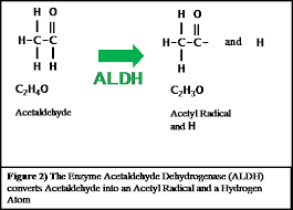 Alcohol Metabolism Chart How Alcohol Is Metabolized In The Human Body