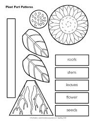 Small Picture Best 10 Plant science ideas on Pinterest Teaching plants