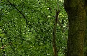 Bomen Met Groene Bladeren Wallexclusive Fotobehang