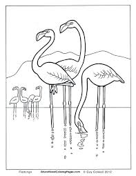 Small Picture Flamingo coloring pages flamingo colouring pages Coloring Pages