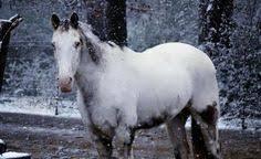 Equine Melanoma Info