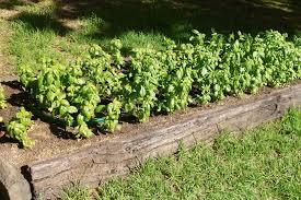 build a raised garden bed