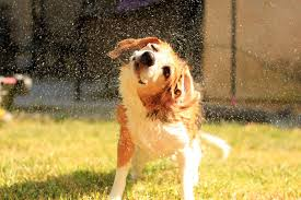 dogs don t baths by oleg