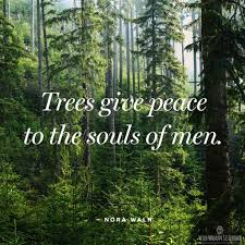 Trees Things For My Wall Nature Quotes Dietrich Bonhoeffer