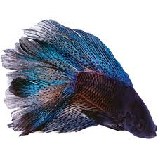 petco freshwater fish.  Petco With Petco Freshwater Fish S