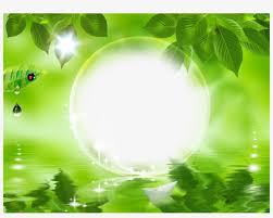 nature frames nature green leaf