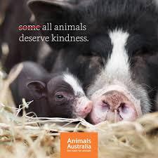Image result for Animals Australia
