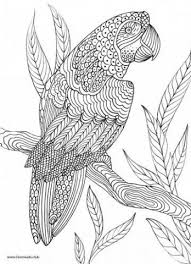 Realistic Bird Coloring Pages Baffling Adult Coloring Pages Birds 11