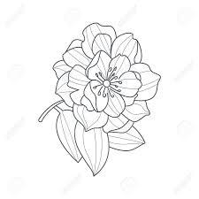 予約手描きベクトル シンプルなスタイルのイラストを着色するため牡丹の花白黒図面を完全に開く