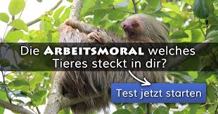 ᐅ Die Arbeitsmoral Welches Tieres Steckt In Dir