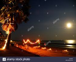 Moonlight Tree Lighting Moonlight Tree Lighting Stock Photos Moonlight Tree