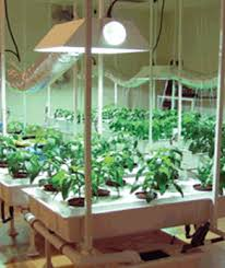 indoor hydroponic vegetable garden. How To Grow Marijuana | Growsetup Indoor Hydroponic Vegetable Garden D