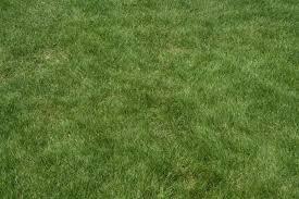 tall grass texture seamless. Textures Tall Grass Texture Seamless T