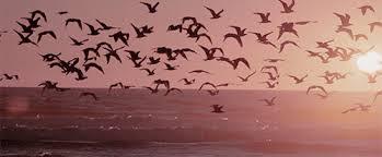 birds flying in the sky tumblr. Simple Tumblr Frenzyy Inside Birds Flying In The Sky Tumblr