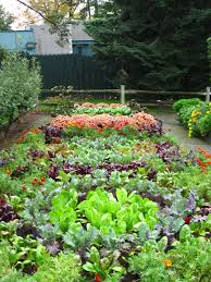 Small Picture Blend a variety of vegetables together in a veggie garden to