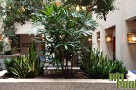 interior landscaping office. Contemporary Landscaping Contact Metro Tropical Plant Company Today To Learn More About Our Office  Interior Plant Installation And Maintenance Services At 6172165449 Or Click  On Interior Landscaping Office R