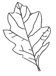 Fall Leaf Coloring Pages For School Projects Car Trips
