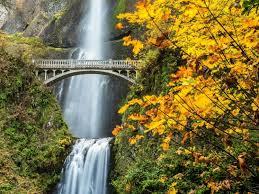 nature forest bridge autumn amazing