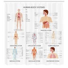 Human Anatomy Complete Chart Of Different Organ Body Structures Cell Life Medical Illustration Single Shower Curtain