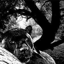 black panther in tree png clip art wild cats digital image download jungle animal printable wall on black panther animal wall art with best black panther animal products on wanelo