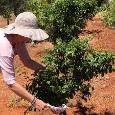 Organic Kitchen Gardening 5 Easy Veggies To Start Your Kitchen Garden Chapter Fiftychapter