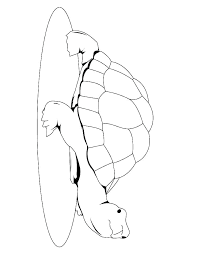 Green Sea Turtle Coloring Page Cute Turtle Coloring Pages Of Sea