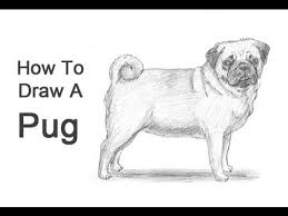 realistic dog drawing step by step. Plain Drawing Intended Realistic Dog Drawing Step By