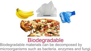 Biodegradable And Non Biodegradable Difference Between