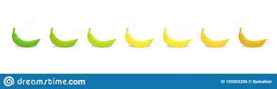 Banana Ripeness Stages Chart Colour Gradation Set Plant