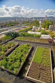 rooftop garden roof garden design