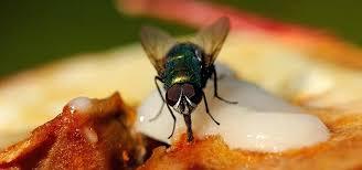 Resultado de imagem para keep flies out of the kitchen