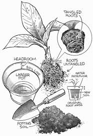 how to re pot a houseplant houseplants pinterest houseplant Low Maintenance Houseplants how to re pot a houseplant low maintenance house plants pictures