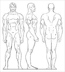 Sample Male Human Body Drawing Template human body template 24 free word, pdf, ppt documents download on book report template download word