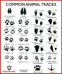 Animal Paw Print Chart Www Prosvsgijoes Org