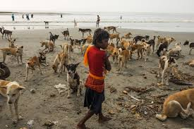 chasing the sacred down the ganges from snow to sea proof picture of a child on the beach a pack of dogs on sagar island