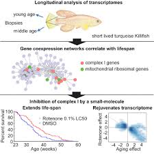 Aging Analysis Longitudinal Rna Seq Analysis Of Vertebrate Aging Identifies