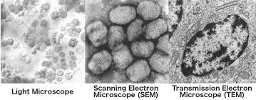 Electron Microscope How Does An Electron Microscope Work