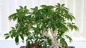 Best indoor plants for office Ideas 20 Small Indoor Plants That Can Improve Your Office Environment Small Business Trends 20 Indoor Plants That Can Improve Your Office Environment Small