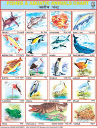 Fishes Aquatic Animals Hindi Alphabet Learn English